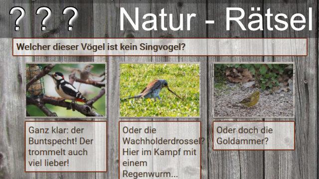 Quiz heimische Vögel
