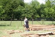 Viel Holz für viele Ranger.