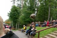 Wildpark Stromberg Starter Ludwigsburg
