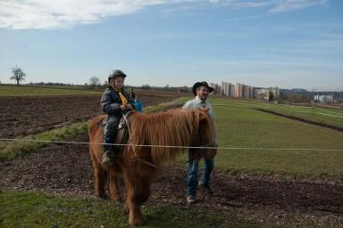 Pony - Bauernhof