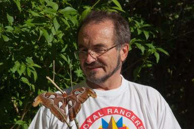 Der größte Schmetterling der Welt