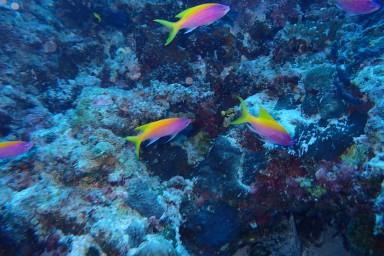 sf 20180810 male Check Dive 6 (1) hd