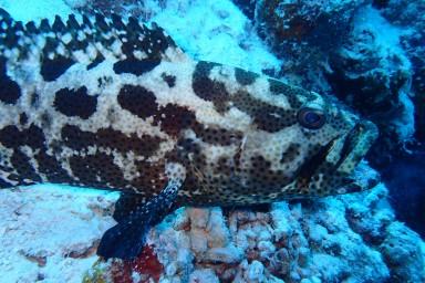 sf 20180810 male Check Dive 6 (11) hd