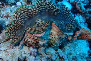 sf 20180810 male Fish Head 8 (95) hd