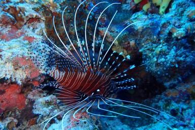 sf 20180810 male Fish Head 8 (104) hd