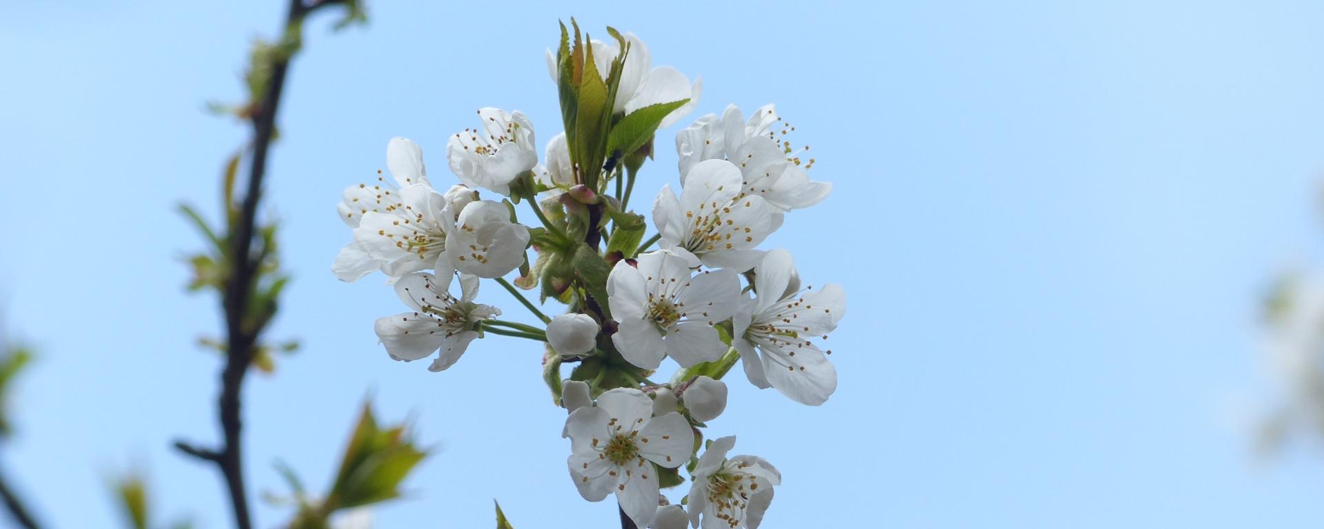Frühling - perfekte Jahreszeit für Pfadfinderei