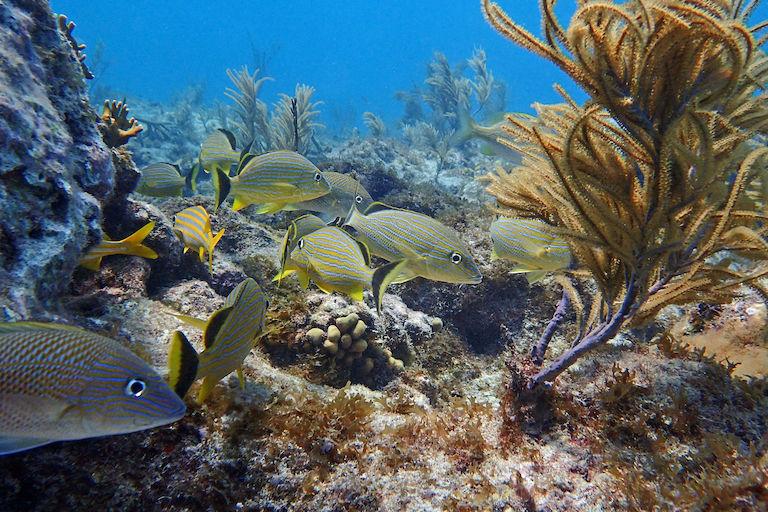 Fischschwärme in Florida