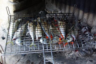Fischgrillen
