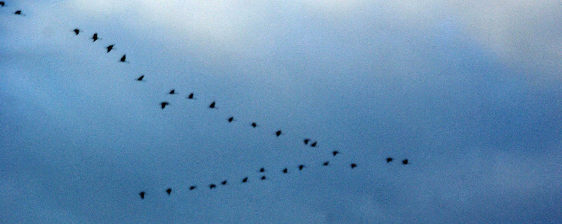 Den Flug der Kraniche