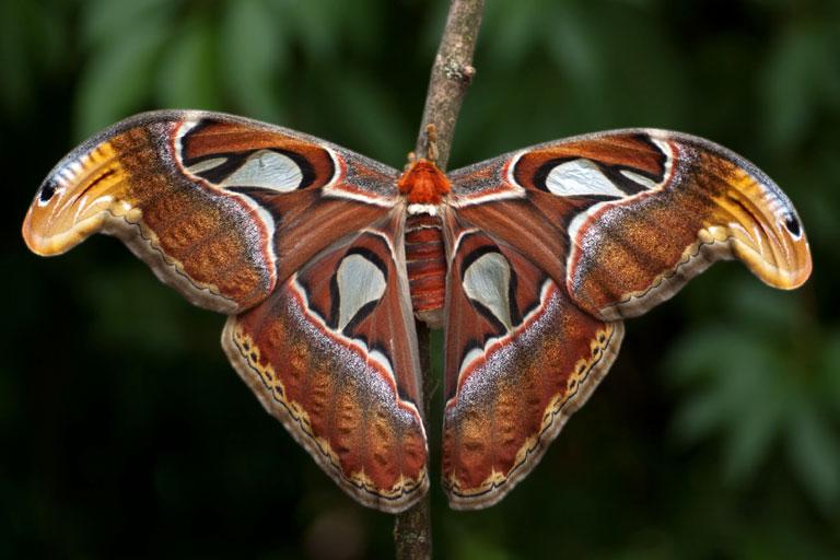 Schmetterlingsquiz - einheimische und tropische Schmetterlinge