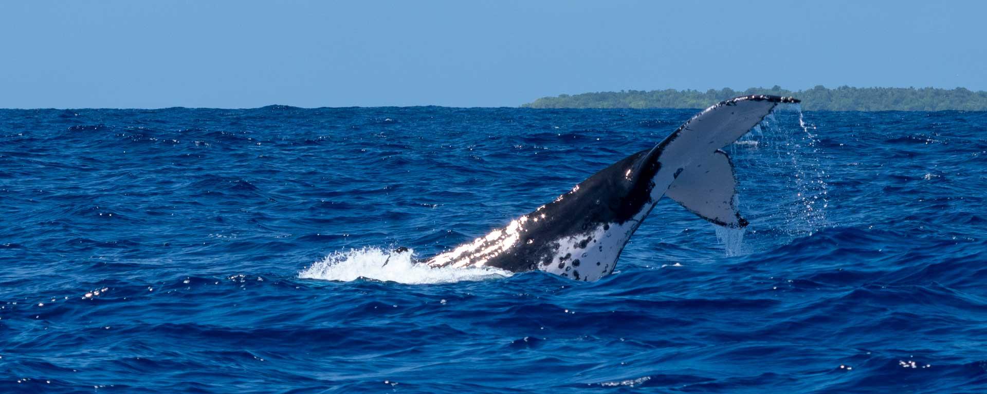 Abenteuer - Wale